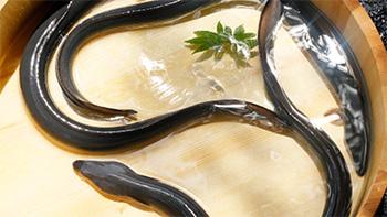 桶の水の中で泳ぐ生きた鰻